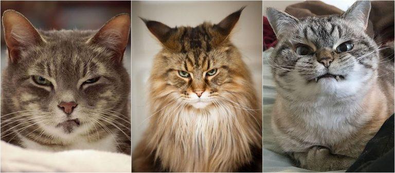 รวม 15 ภาพแมวโกรธ ถึงโกรธยังไงก็ดูน่ารัก