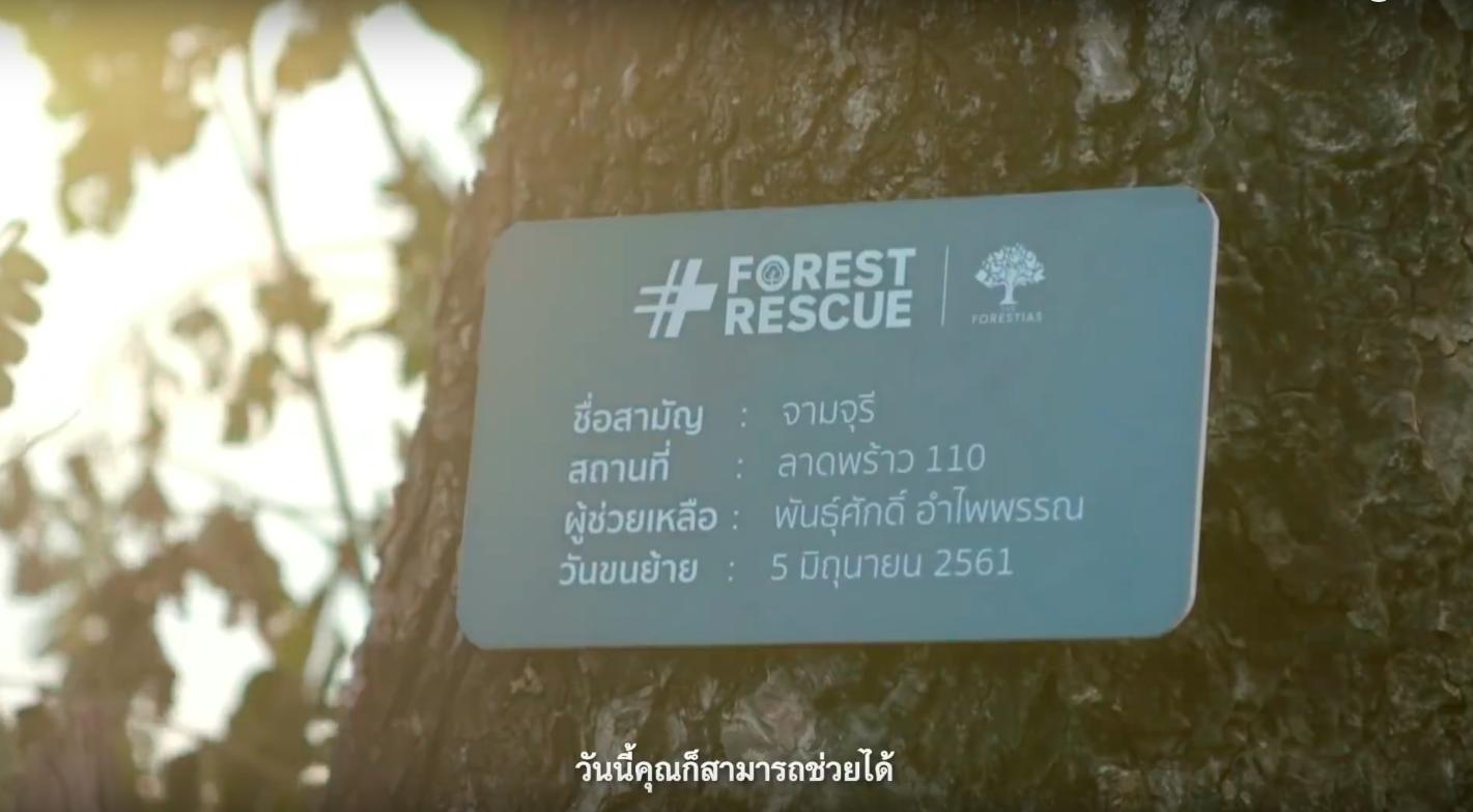 Protected: #ForestRescue แฮชแท็คง่าย ๆ ที่ทำให้คุณช่วยกู้ชีวิตให้ต้นไม้กลับคืนมา